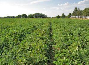 UPA pide a Agricultura que convoque mesas de diálogo para fijar la posición de C-LM en torno a la reforma de la PAC